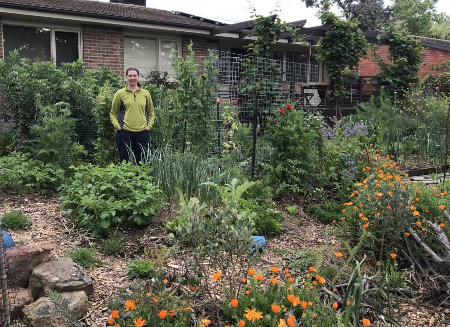 A suburban garden