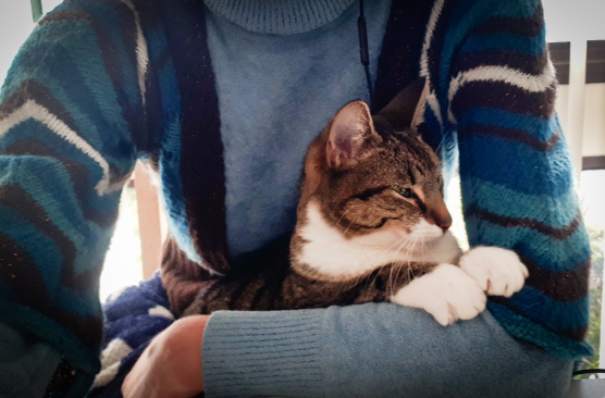 A cat being held in a lap.