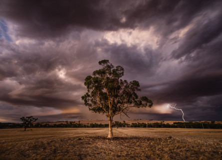A single gum tree stands in an empty field as dark purple clouds and lightning cover the background.