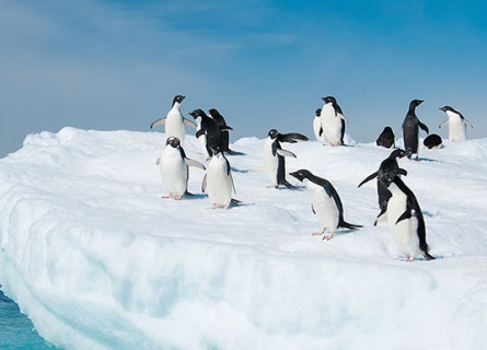 A group of black and white penguins on a large iceberg, with blue-green water visible to the side.
