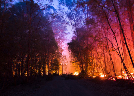 Bushfire among trees in Australia, November 2019
